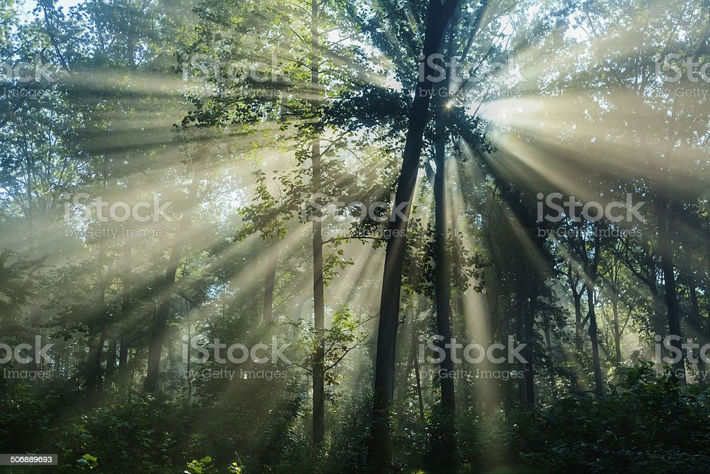 Morning Sunlight Casting Rays Through a Foggy Forest stock photo