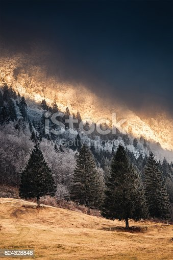 Winter forest in early morning sunlight.