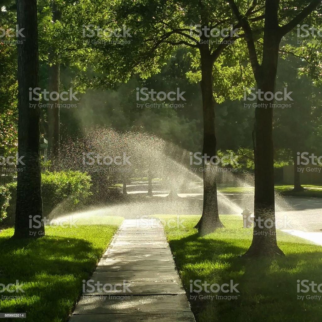 Morning Sunlight through Sprinklers stock photo
