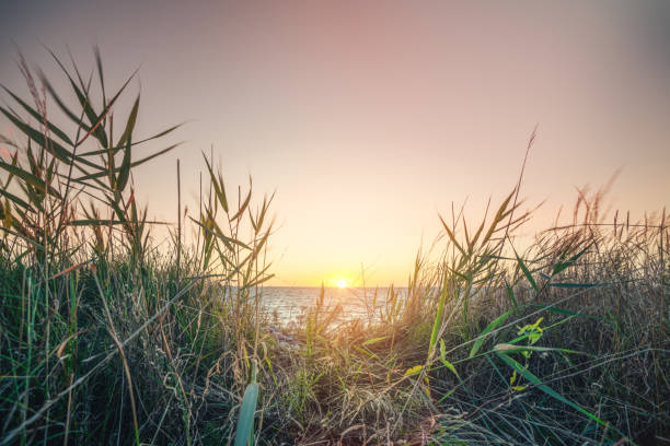 Morning sunrise by the sea with green grass stock photo