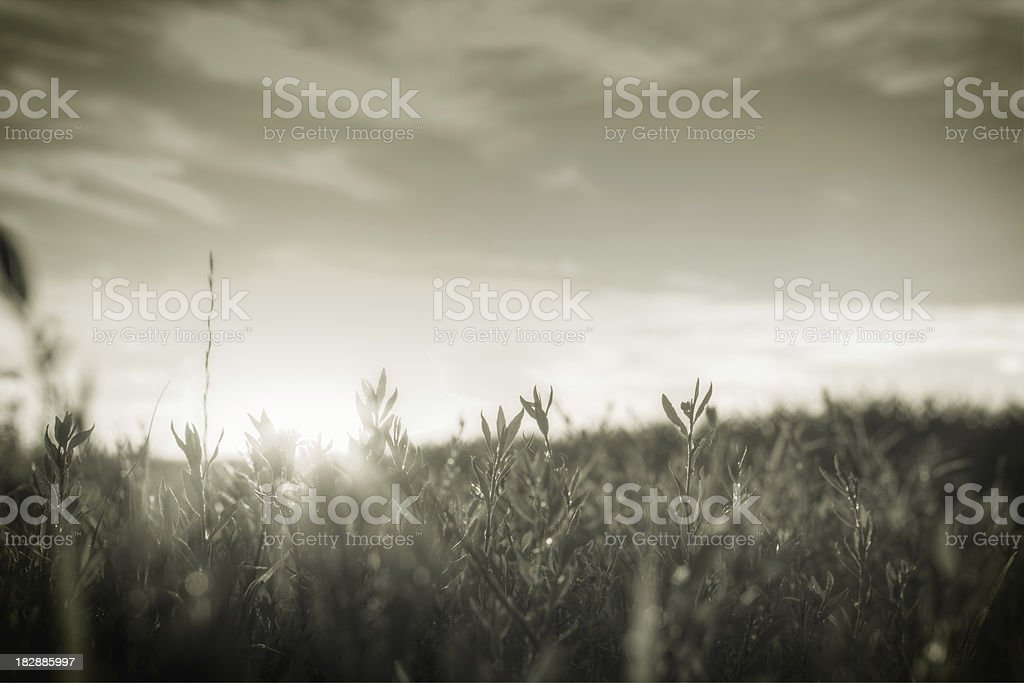Morning sunrise in the meadow royalty-free stock photo
