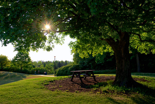 morning sunrise in the park stock photo