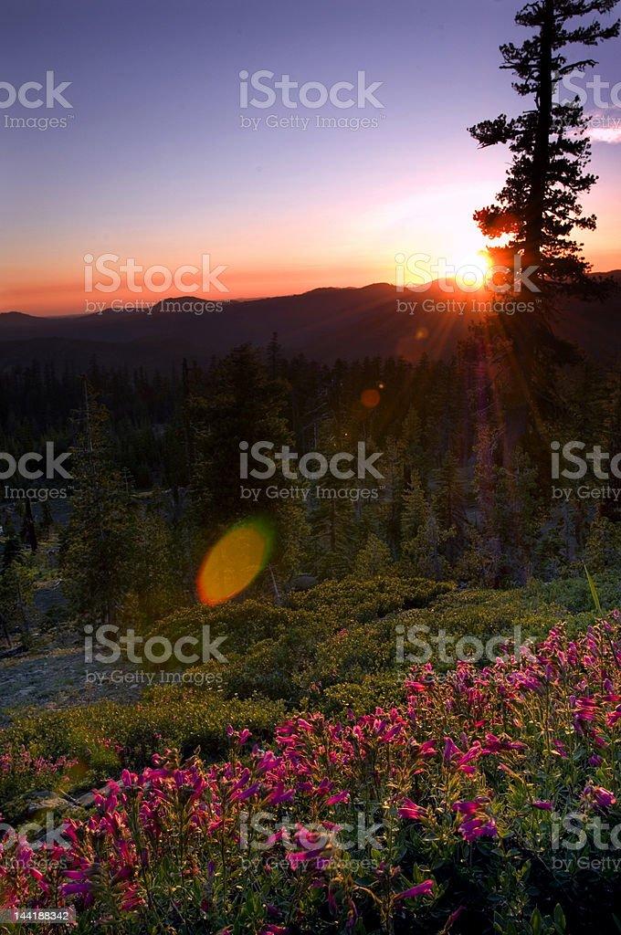 morning sunrise royalty-free stock photo