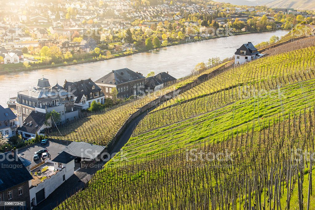 Morning sunshine in Mosel stock photo
