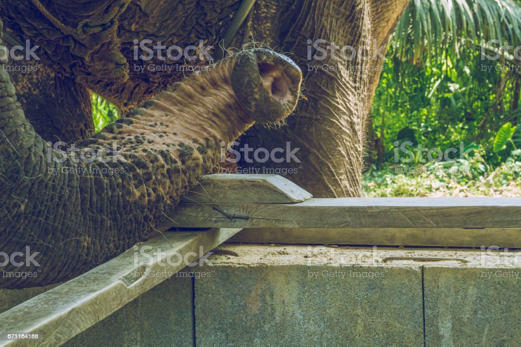 Morning time in Thailand. 2016 stock photo