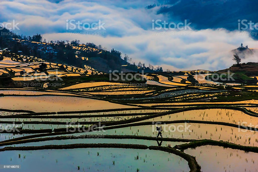 Morning View of China Rice Fields and Peasant walking stock photo
