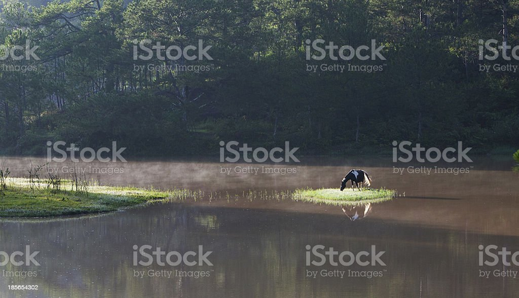 Morning view of landscape in Dalat, Vietnam royalty-free stock photo