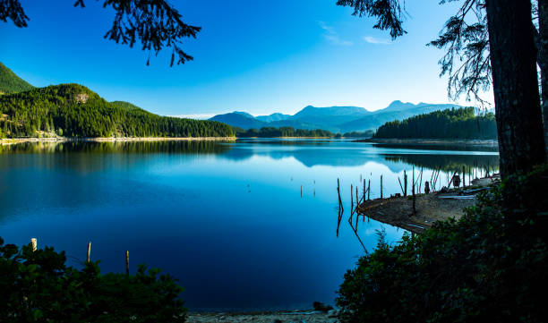A morning view of Lois Lake with tree stumps stock photo