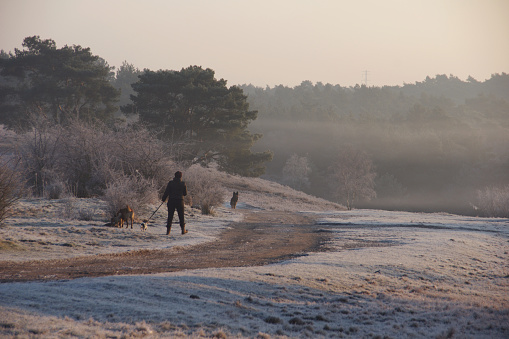 Morning walk in the heathland