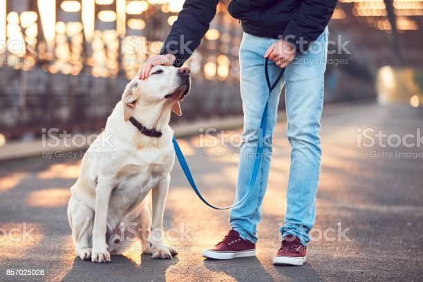 Morning walk with dog at the sunrise picture id857025028?b=1&k=6&m=857025028&s=612x612&h=bndr78vhkht w6pxwmteyj bct  gvyy9mrdvd7xmrg=