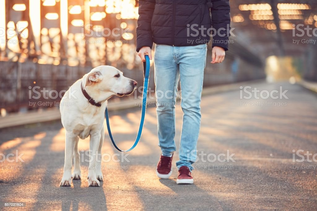 Morning walk with dog at the sunrise stock photo