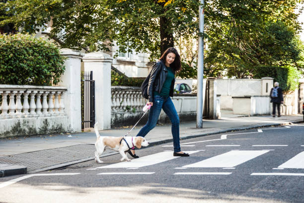 Morning walk with dog in london picture id1081582096?b=1&k=6&m=1081582096&s=612x612&w=0&h=meqcx9vmcp4sirpsgegluucm5dmkvj5cbjabqgc14yg=