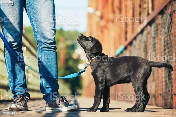 Morning walk with dog picture id589434932?b=1&k=6&m=589434932&s=612x612&h=d4difhquqndxzjaacpqpft6z7 x1vx ka8mrrxlcn6e=