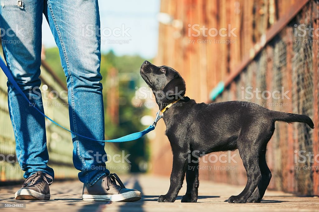 Morning walk with dog stock photo