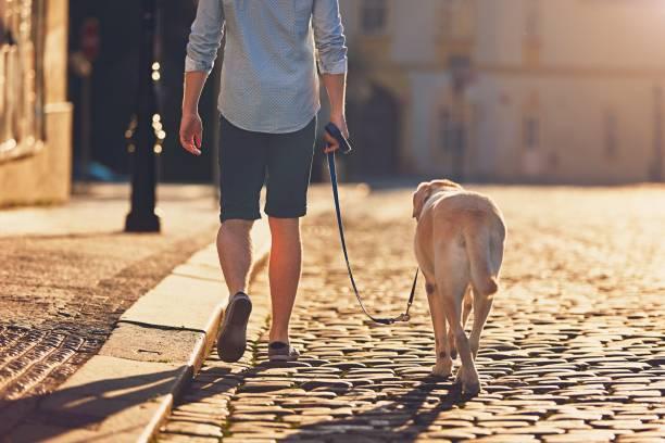 Morning walk with dog picture id690510922?b=1&k=6&m=690510922&s=612x612&w=0&h=iedbgk2bg5h6cqouelyuifnk6jet3fqsc8gdlyvhlym=