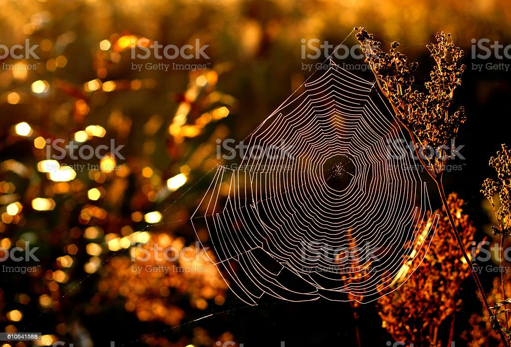 Morning web in golden autumn. stock photo