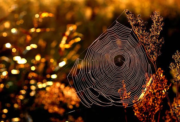 Morning web in golden autumn. stock photo