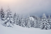 Morning winter calm mountain landscape with beautiful frosting fir trees and ski track thrue snowdrifts on mountain slope