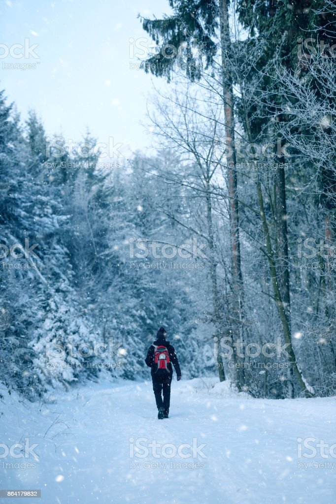 Morning Winter Walk royalty-free stock photo