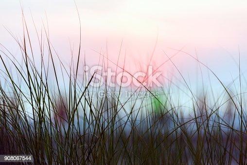 istock Mornings on a tropical beach 908067544
