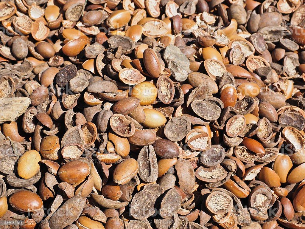 Moroccan Argan nuts stock photo