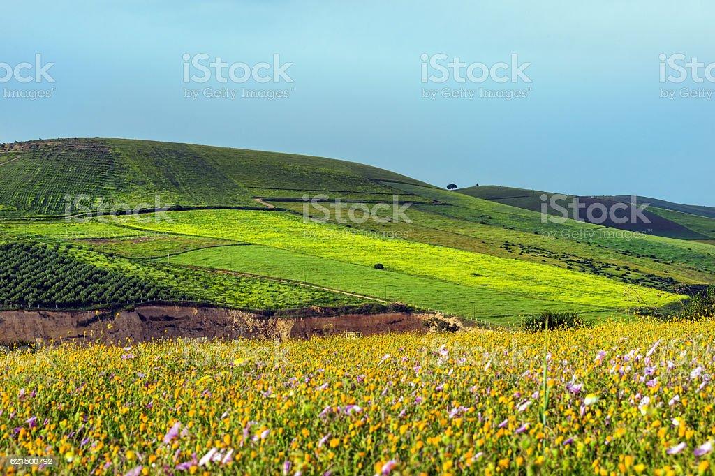 Moroccan Lanscape près de Meknes, Afrique photo libre de droits