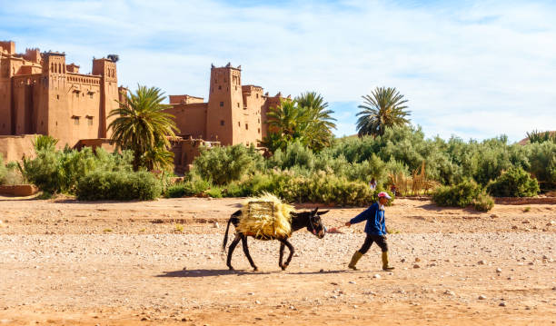 Moroccan Man Walking with Mule past Ait Benhaddou stock photo