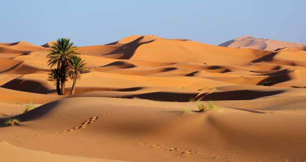 morocco. sand dunes of sahara desert - desert stock pictures, royalty-free photos & images
