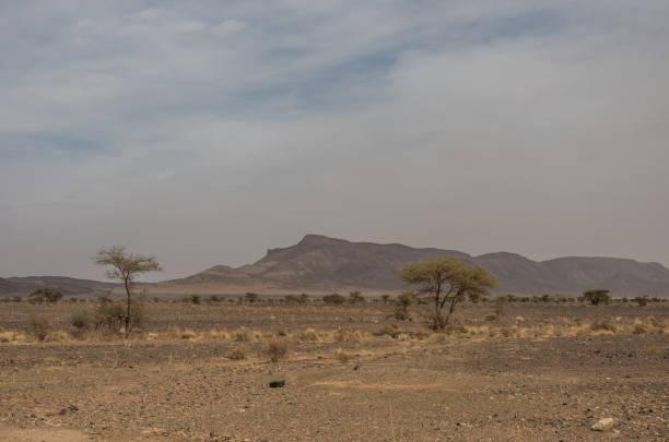 marokko steppenlandschaft mit bäumen und berg im hintergrund. bereich zwischen atlas-gebirge und wüste sahara. - afrikanische steppe dürre stock-fotos und bilder