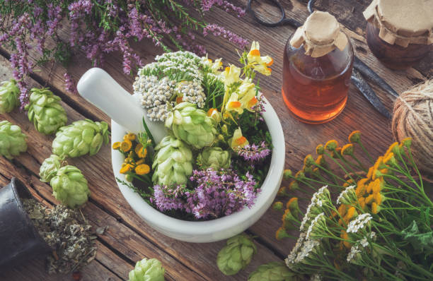mortar of medicinal herbs, healthy plants, bottle of tincture or infusion. top view. herbal medicine. - erva imagens e fotografias de stock