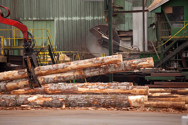 Best Saw Mill Stock Photos, Pictures & Royalty-Free Images