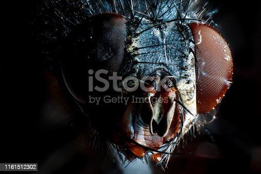 super macro fotografía de una mosca