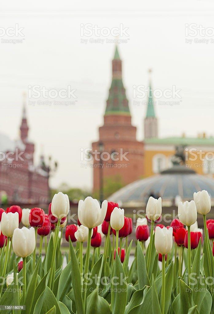 Moscow Tulips stock photo