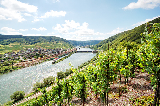 Mosel River vineyard with villages Fankel.