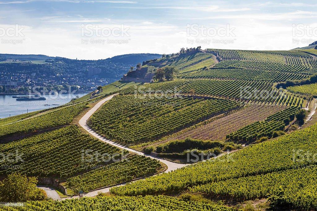 Vignobles de la région de la Moselle en Allemagne en automne - Photo