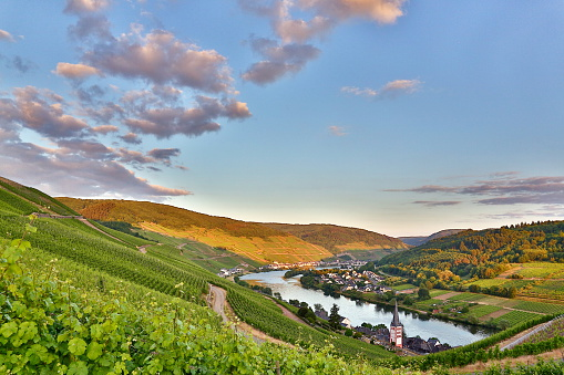 Moselle and vineyards in summer