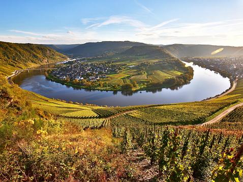 Moselle loop near Kröv in autumn