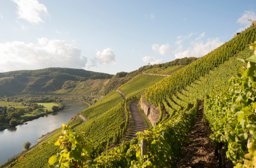 Mosel, Moselle Valley, Marienburg, Puenderich, Zell, Germany