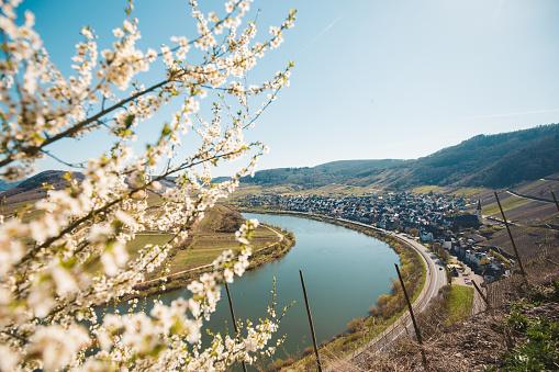 Moselle river bend in springtime, Rheinland-Pfalz, Germany