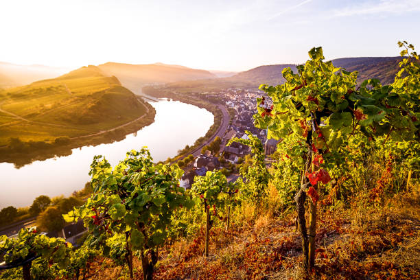 Moselle river bend stock photo