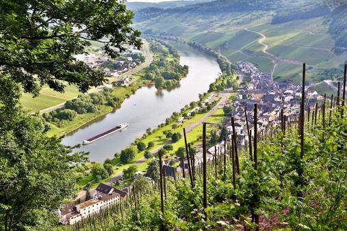 Moselle valley near Ürzig