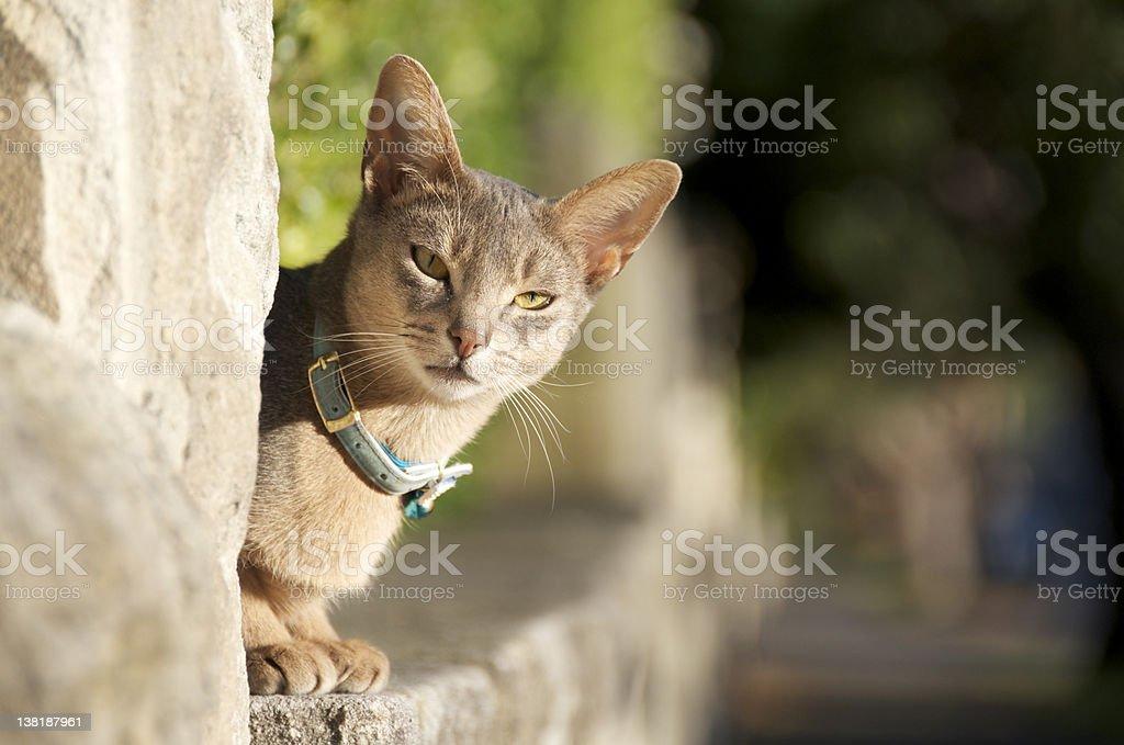 Mosman cat stock photo
