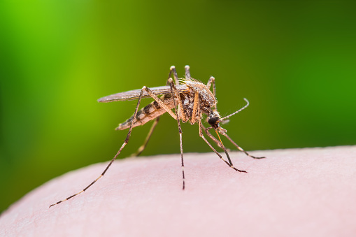 Mosquito Bite Macro Photo