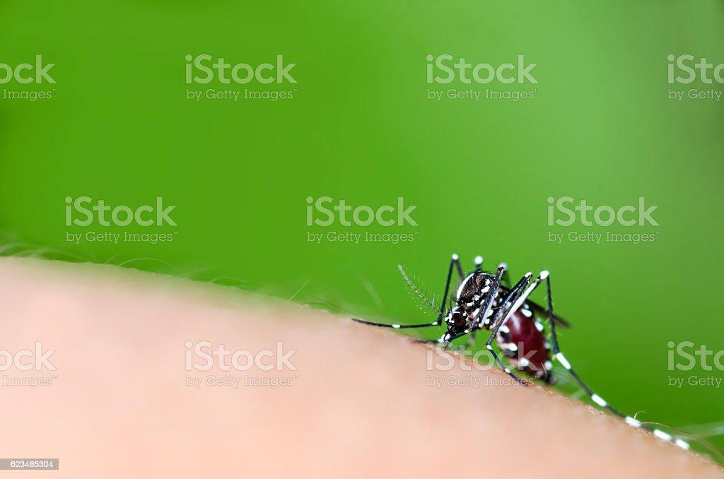 mosquito bite stock photo