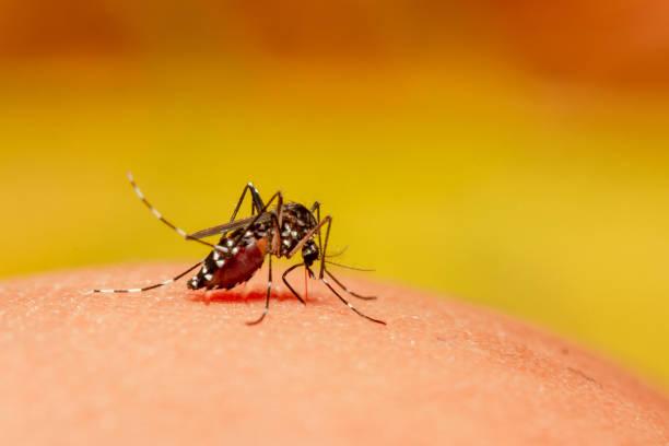 mosquito close up - white background стоковые фото и изображения