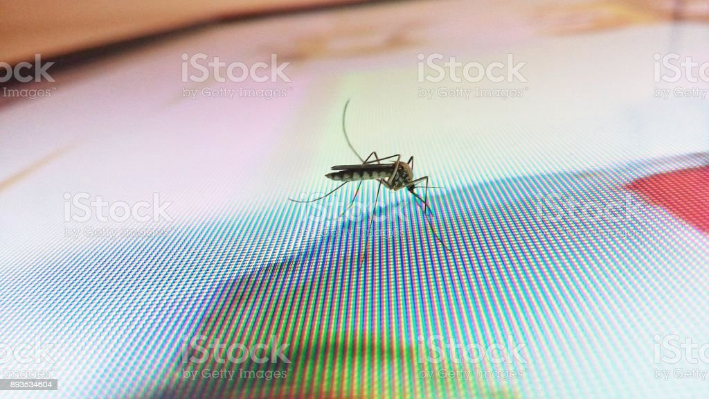 Mosquito insect stock photo