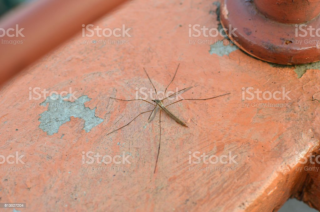 Mosquito on a Balcony Wall stock photo