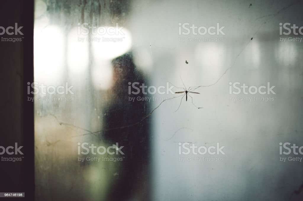 Mosquito on a glass crack royalty-free stock photo