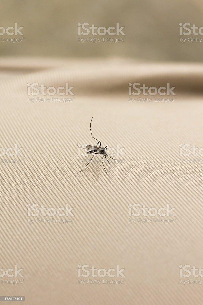 Mosquito on Clothing stock photo