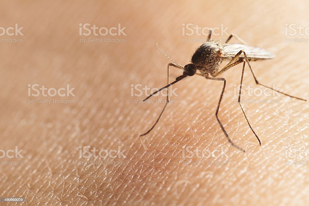 Mosquito on human hand stock photo